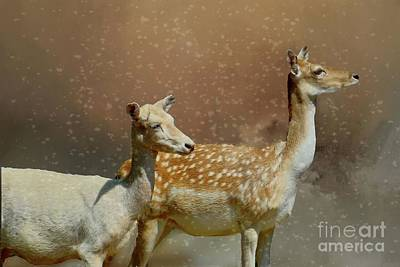 Photograph - Deer In Winter by Janette Boyd