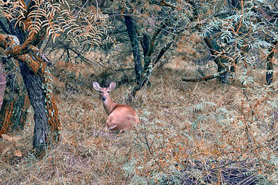 Photograph - Deer In Woods by Robert Brown