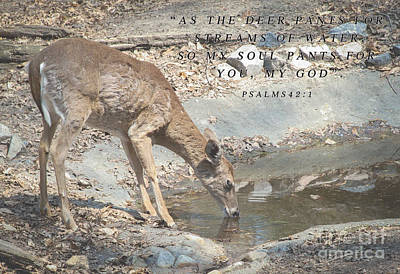 Impressionist Landscapes - Deer inspirational quote by Wesley Farnsworth