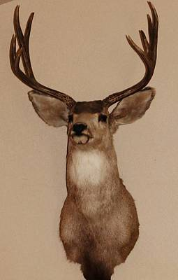Photograph - Deer by Joseph Frank Baraba