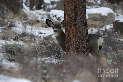Photograph - Deer Looking At Me by Loriannah Hespe
