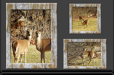 Amish Community Photograph - Deer Lovers by Tina M Wenger