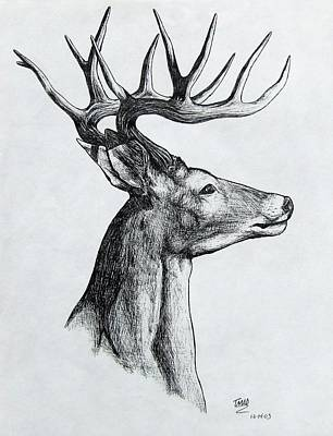 Art Print featuring the drawing Deer by Michael  TMAD Finney