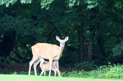 Decor Photograph - Deer Nursing Fawn  by Neal Eslinger