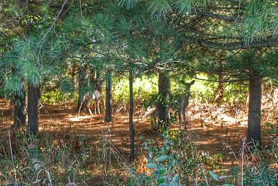 David Bowie Royalty Free Images - 1011 - Deer of Croswell I Royalty-Free Image by Sheryl L Sutter