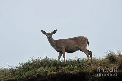 Photograph - Deer On Ridge Foggy Day by David Arment