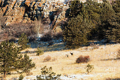 Photograph - Deer On The Mountain by Steve Krull