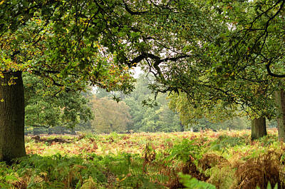 Photograph - Deer Park by Spikey Mouse Photography