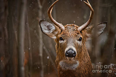 Deer Pictures 594 Original by World Wildlife Photography