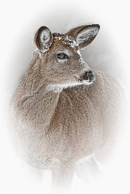 Deer Pictures 613 Original by World Wildlife Photography