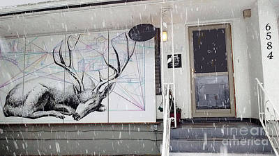 Photograph - Deer Resting @ Deer Lake Gallery by Bill Thomson