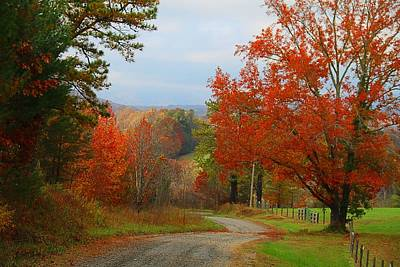 Photograph - Deer Road In Autumn by Kathryn Meyer