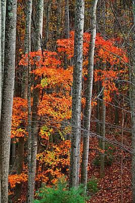 Photograph - Deer Road Vertical by Kathryn Meyer