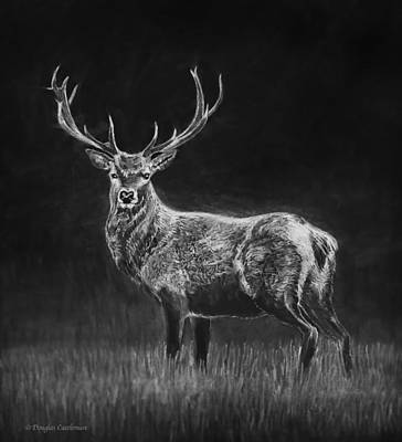 Drawing - Deer Sketch by Douglas Castleman