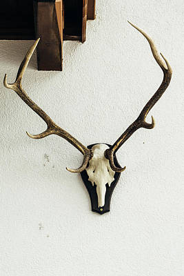 Photograph - Deer Skull On Wall by Pati Photography