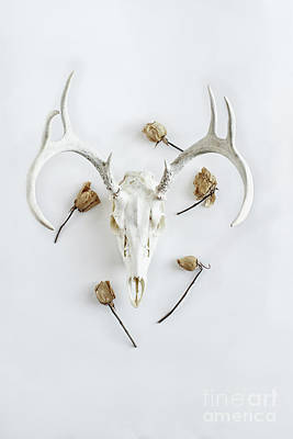 Photograph - Deer Skull With Antlers And Roses by Stephanie Frey
