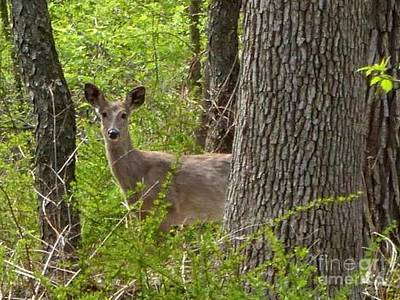 Photograph - Deer Through The Leaves by Kathie Chicoine