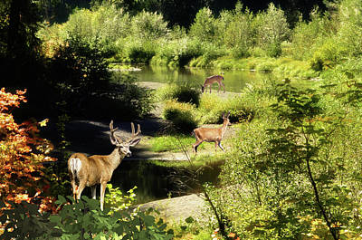 Photograph - Deer Trail To The River by Diane Schuster