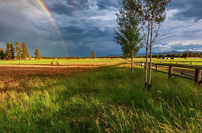 Photograph - Deer Under The Rainbow by Cat Connor