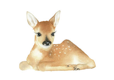 Painting - Baby Deer Watercolor by Zapista