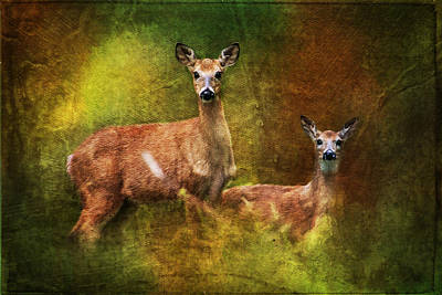 Painting - Deer Whitetail Does Pine Mountain  by Christina VanGinkel