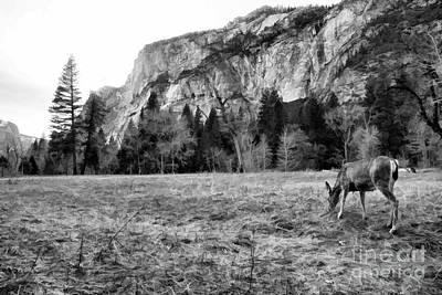 Photograph - Deer Yosemite National Park  by Chuck Kuhn