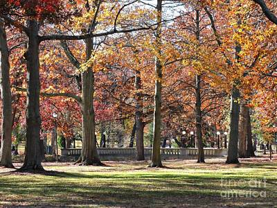 Photograph - Deering Park by Marcia Lee Jones