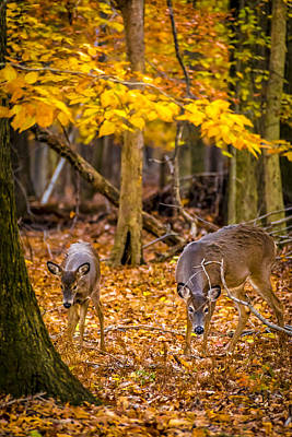 Photograph - Deers In Autumn 1 by Francisco Gomez