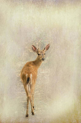 Photograph - Deertwo by Marilyn Wilson