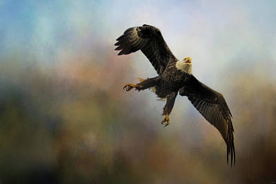 Photograph - Defender Bald Eagle Art by Jai Johnson