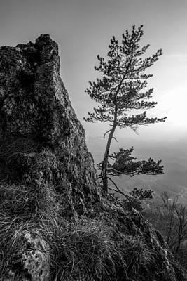 Grass Rocks Photograph - Defiant IIi by Davorin Mance