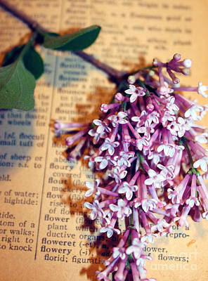 Photograph - Defining Lilacs by Nina Silver