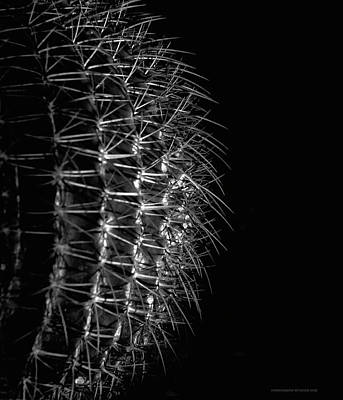 Photograph - Deflection by Denise Dube