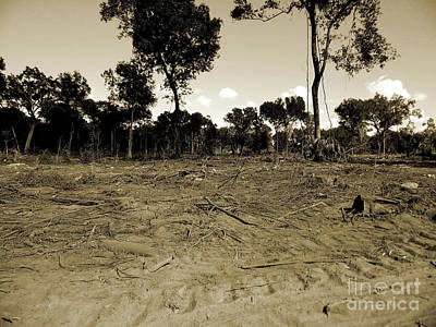 Photograph - Deforestation by D Hackett