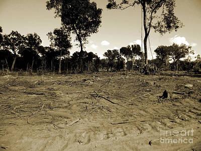 Photograph - Deforestation by D Hackett