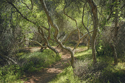 Photograph - Del Mar Mesa - Elfin Forest Trail by Alexander Kunz