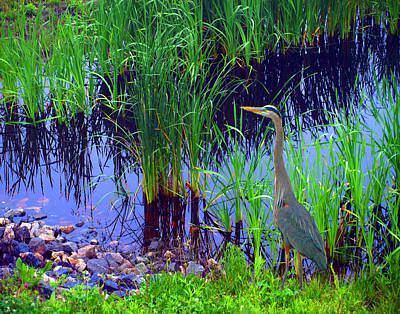 Painting - Delaware Heron by Kim