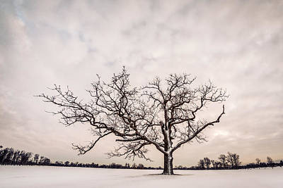 Photograph - Delaware Park Winter Oak - Color by Chris Bordeleau