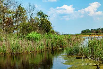 Delaware Wetlands Art Print