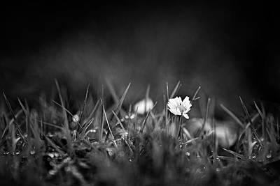 Photograph - Delicacy by Vincent Pelletier
