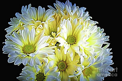 Photograph - Delicate 12118-7 by Ray Shrewsberry