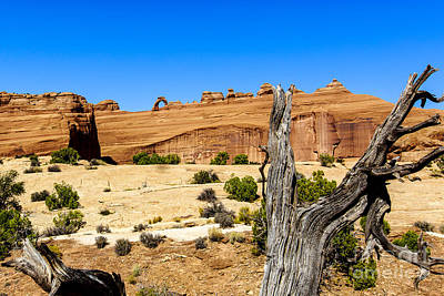 Photograph - Delicate Arch At Arches National Park by Ben Graham