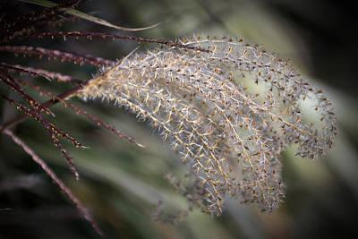 Digital Art - Delicate Autumn by Patrick Groleau