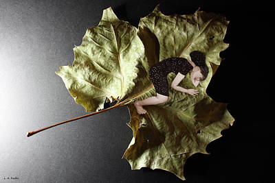 Photograph - Delicate Balance by Lauren Radke