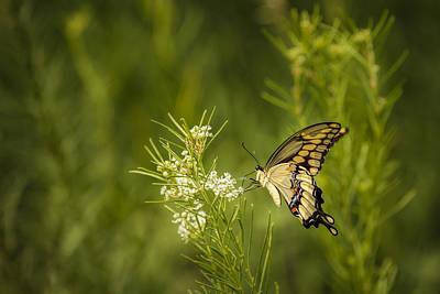 Photograph - Delicate Beauty by Scott Bean