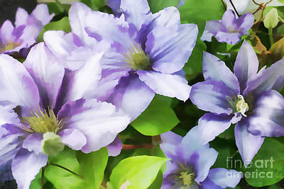 Painting - Delicate Climbing Clematis  by Judy Palkimas