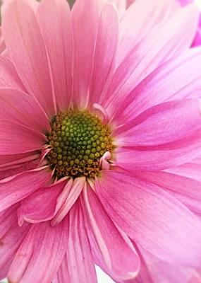 Photograph - Delicate Daisy  by Ellen Levinson
