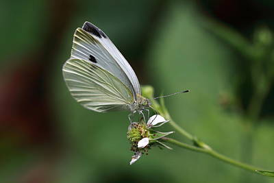 Angels And Cherubs - Delicate Dance  by Paul Slebodnick