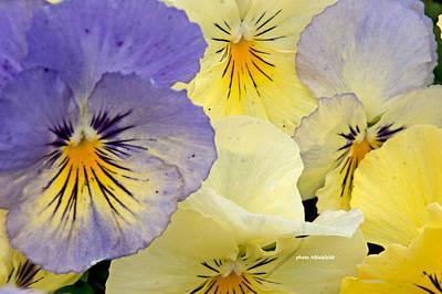 Floral Photograph - Delicate Faces by April Bielefeldt