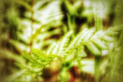 Photograph - Delicate Fern by Yoursbyshores Isabella Shores